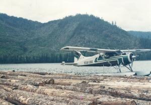 Beaver Parked on Log Raft Photo Credit: Author