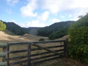 Farm Along Okareka Road