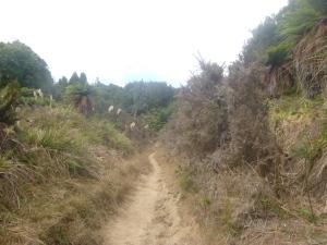 Western Okataina Trail