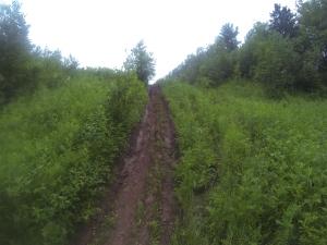 Power Line Trail 2